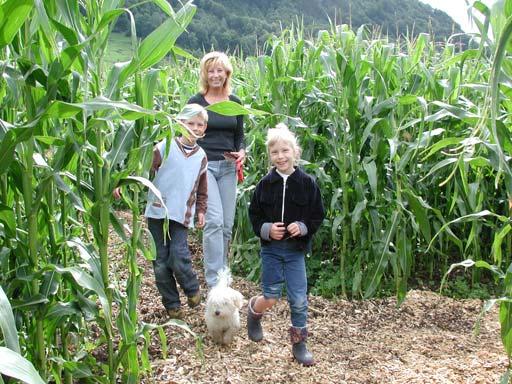 Auf Irrwegen durchs Maisfeld